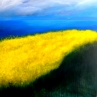 Dall'isola d'oro n. 2